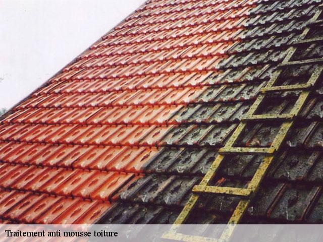 Entreprise traitement anti-mousse toiture à Mourmelon Le Grand tel: 03.59.28.20.55